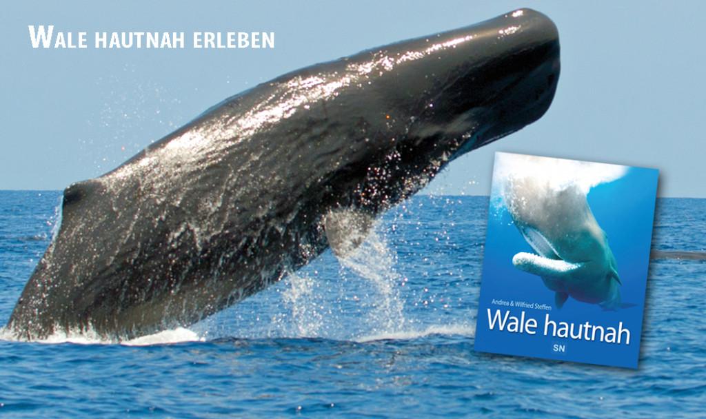 Wale hautnah erleben